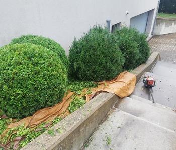 Lim'Jardin - Entretien de jardin